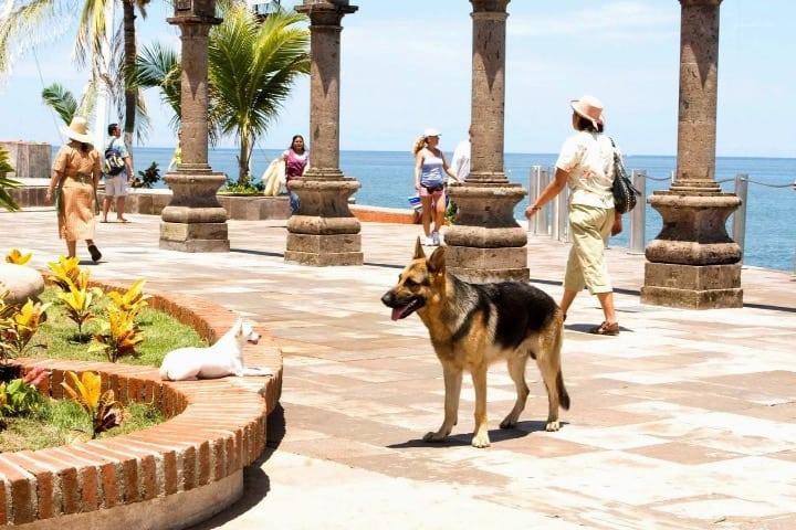 Se grabaron algunas tomas de esta película se grabaron en Puerto Vallarta Foto Archivo