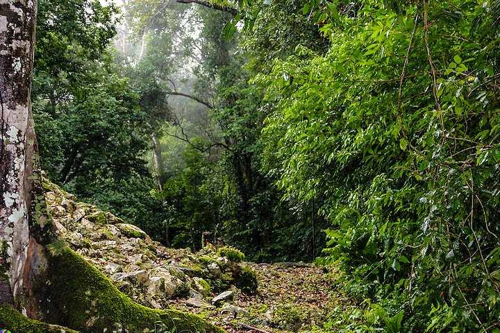 Selva Lacandona. Chiapas. Foto Raúl Villarreal.