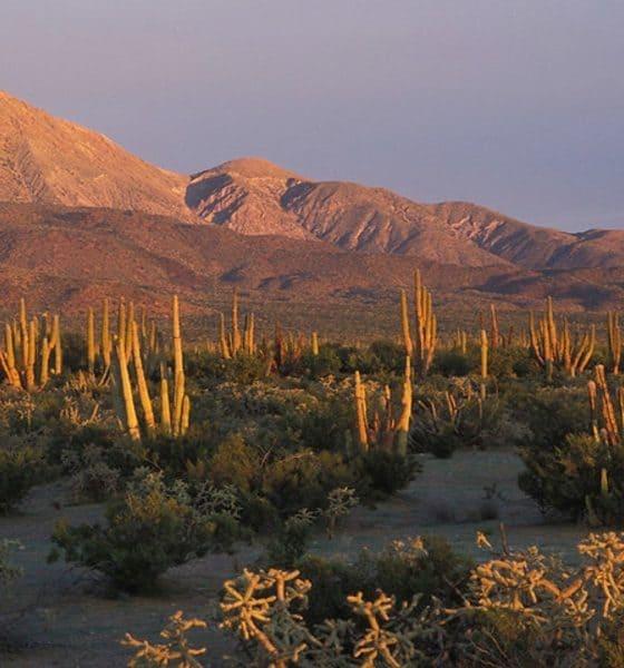 Zona desertica del Vizcaíno Foto Áreas protegidas de México