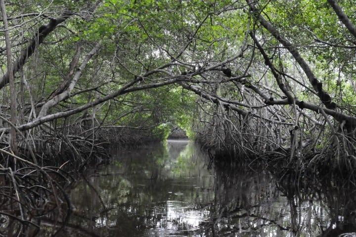 Los manglares de Baja California Sur se prestan para realizar actividades en contacto con la naturaleza Foto: Archivo