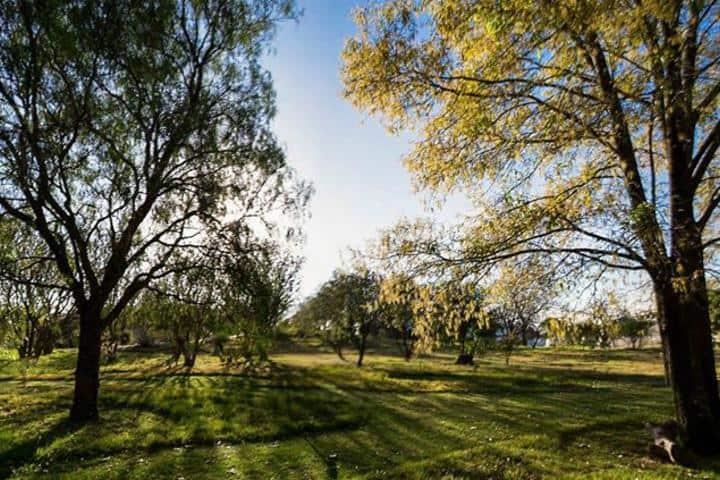 Árboles de este jardín Foto: Facebook