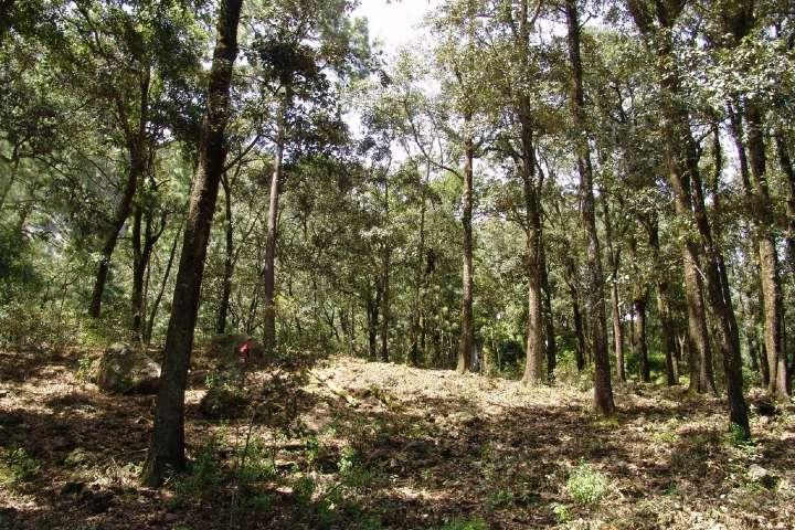 El bosque es impresionante, puedes ver muchos animalitos durante el recorrido. Foto: Naturalesa AB