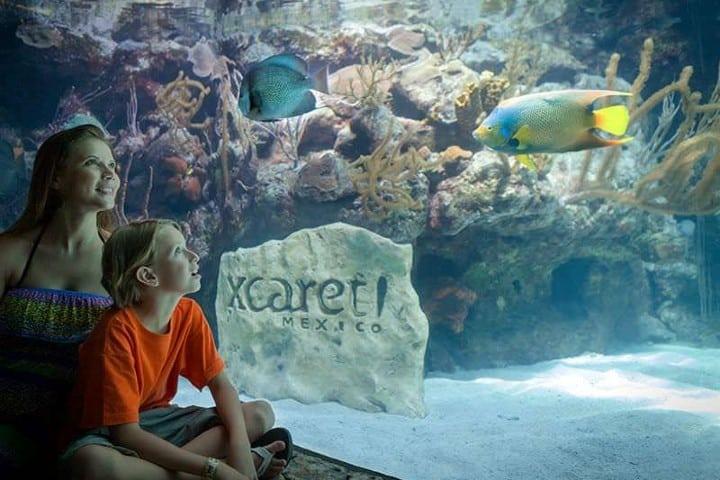 Disfruta en familia del acuario de Xcaret Foto: Archivo