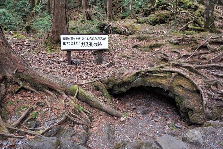 Bosque S (2)