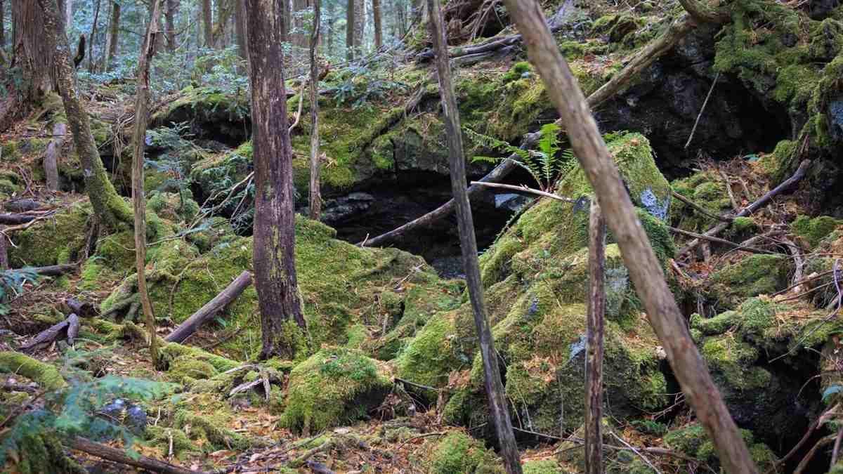 Bosque Suicidios (2)