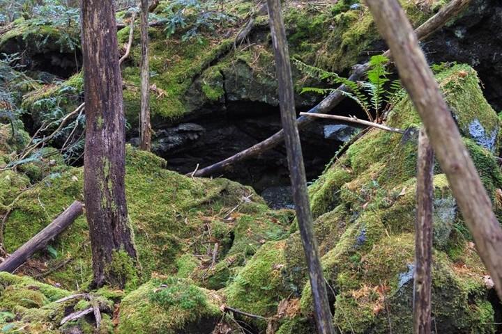 Bosque Suicidios