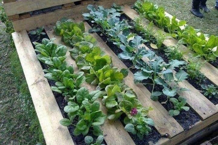Cultivos en el Jardín Botánico BUAP Foto: Facebook