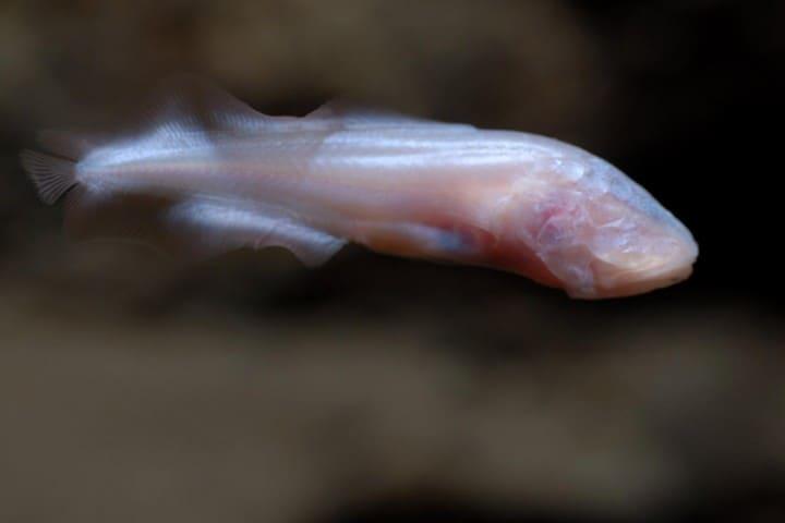 Una dama blanca. Foto: Kantemo Serpientes Colgantes