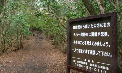 Entrada al Bosque. Foto: La Sexta