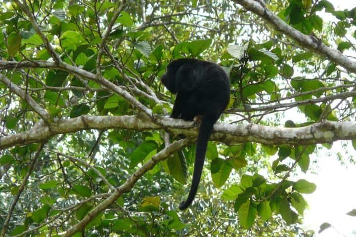 Estos amiguitos estan conlgando por la selva Lacandona. Foto: Tierra Verde