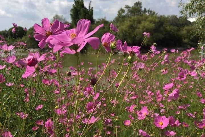 Flores del Jardín Botánico BUAP Foto: Facebook