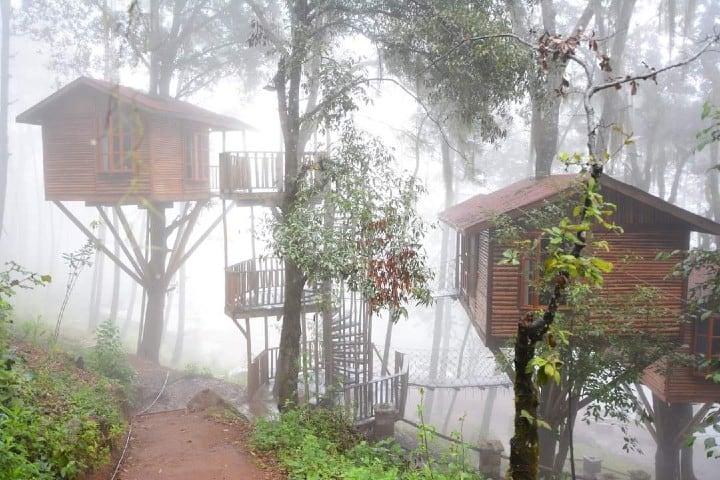 Neblina en las cabañas Kali Tree Foto Kali Tree | Facebook