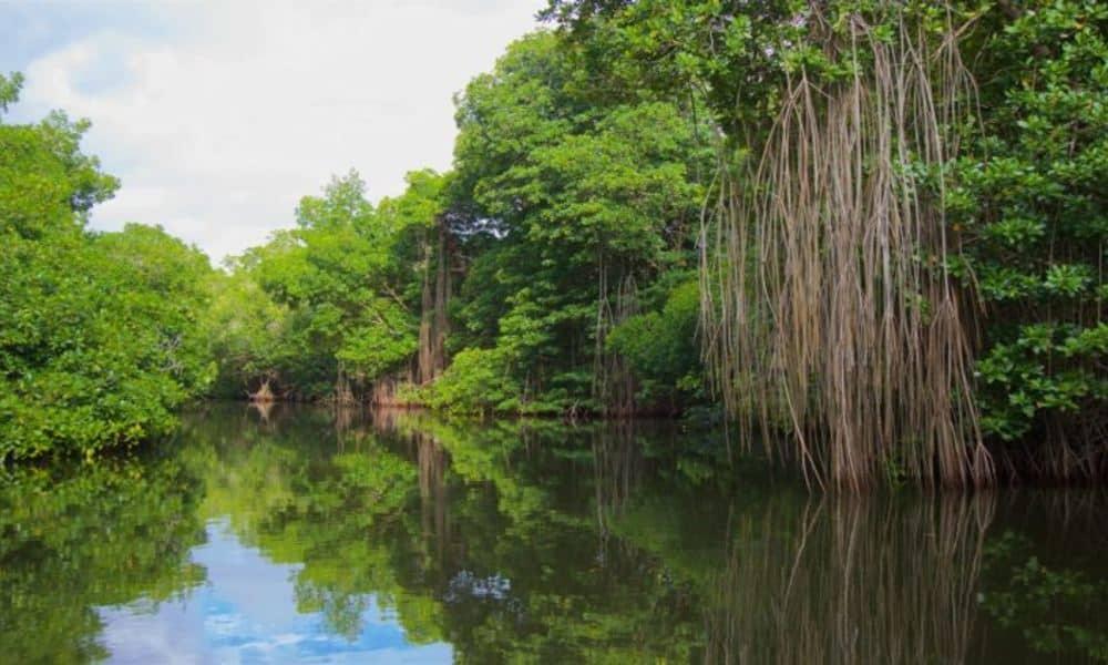 La Laguna Chacahua, es la más grande. Foto: El Democrata