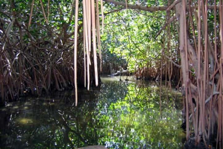 Hermosa vista de los manglares. Foto: Oaxaca Lindo