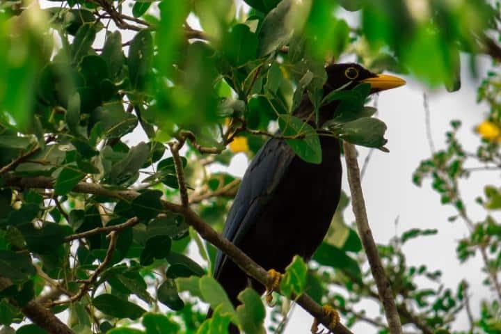 ¡Que bonito es volver a ver la naturaleza! Foto: Turismo de Observación.