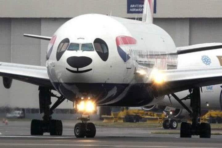 Panda en aviones pintados y divertidos - Foto - P Wolsey