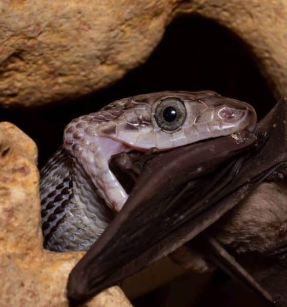 Kantemó: La cueva de las serpientes colgantes. Foto Rutopia