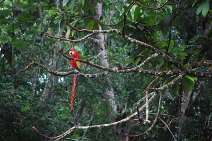 Selva Lacandona. Foto: UNAM