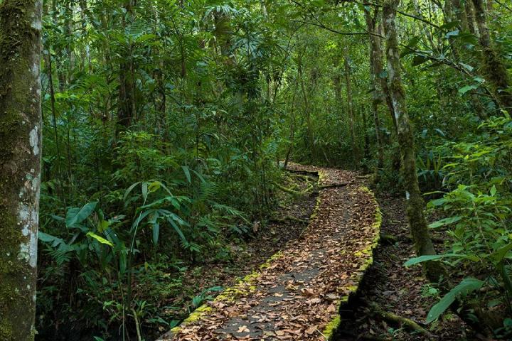 Selva. Foto: TC