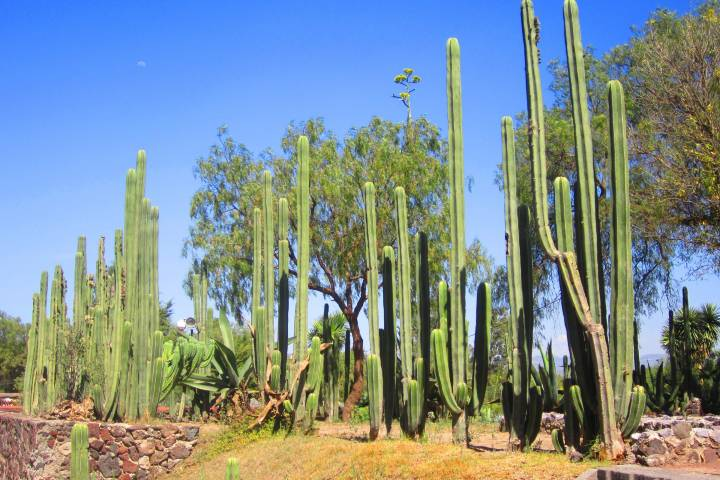 Jardín Botánico Teotihuacan Foto: minube