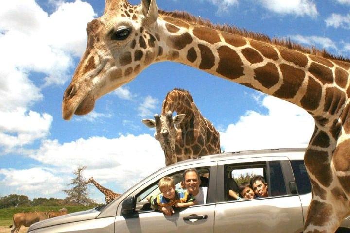 La experiencia que te ofrece Africam Safari es única Foto: Mextika