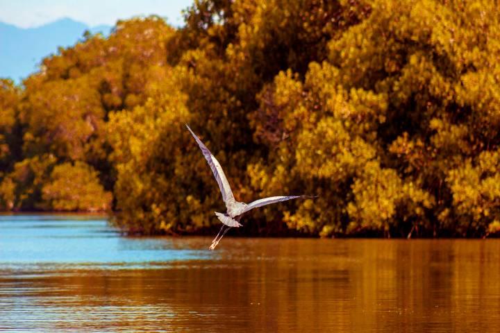 Parque Nacional Lagunas de Chacahua. Foto: Gobierno de México
