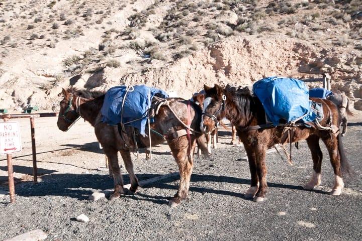 Los caballos con los que podrás recorrer tu camino a las cascadas Foto: Archivo