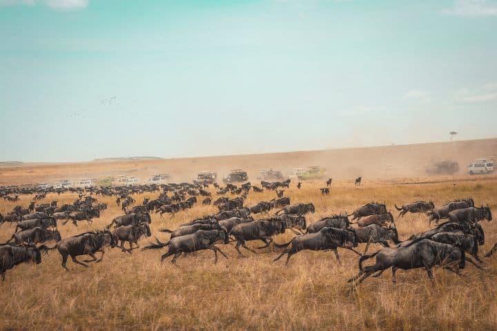 El fenómeno de la migración Foto: harshil gudka | unsplash