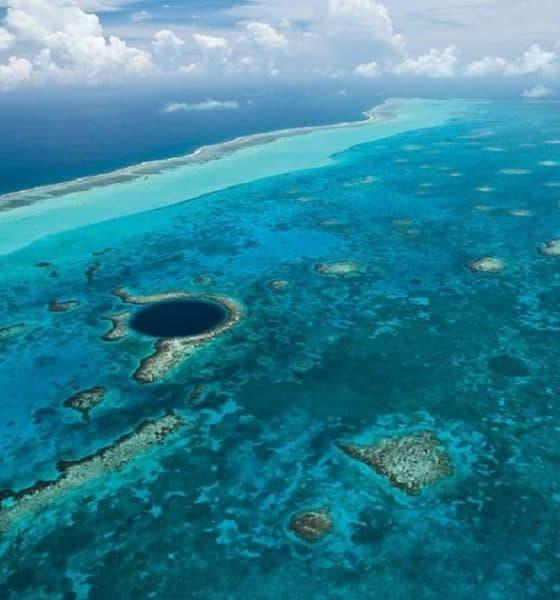 ¿No se te antoja bucear y ver a los peces del Arrecife Mesoamericano? Foto: TecReview