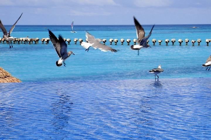 Arrecife Mesoamericano en Quintana Roo