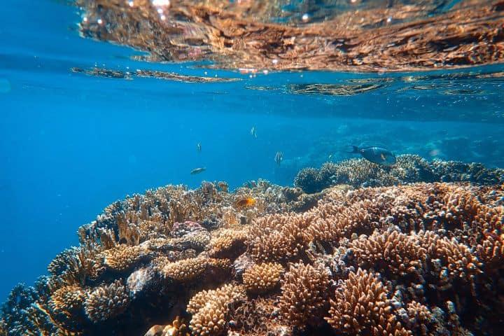 ¡Qué bella vista del arrecife! ¿No lo crees? Foto: Francesco Ungaro | Unplash