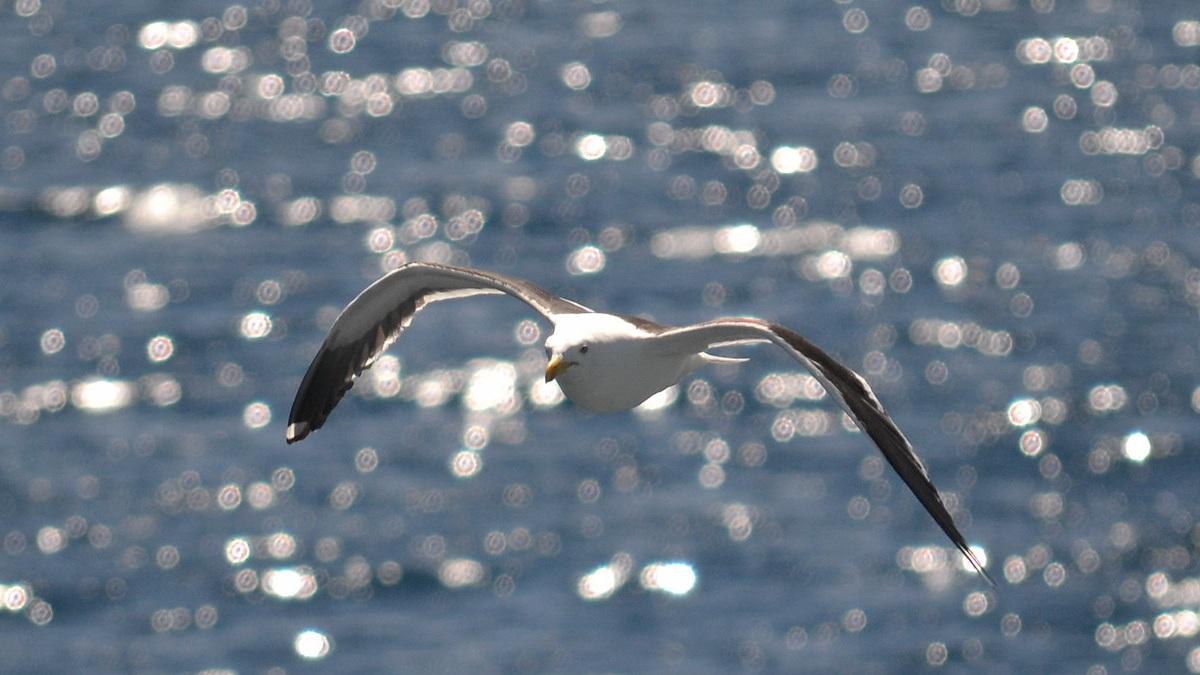 Ave Albatros, la más grande. Foto por Gabriel Penisi