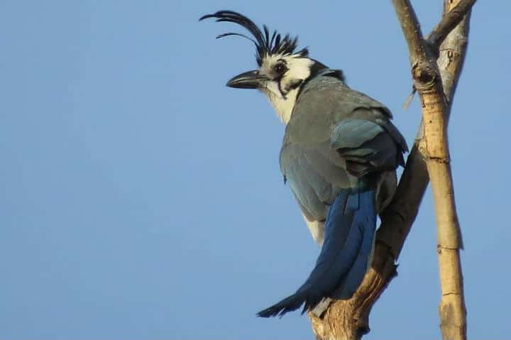 Aves de Colima - Foto Archivo