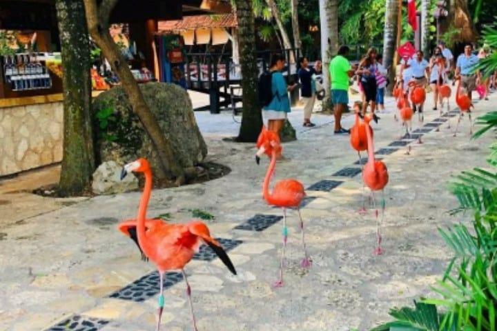Aves de Xcaret en la Riviera Maya Foto: Xcaret