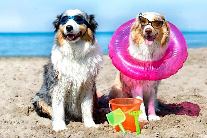 Blog-de-perros-Cuida-Mi-Mascota