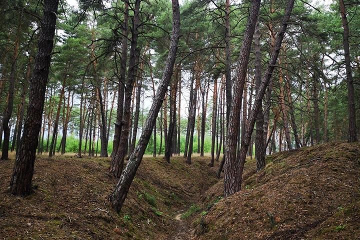 Bosque de Duppeler. Foto: Archivo