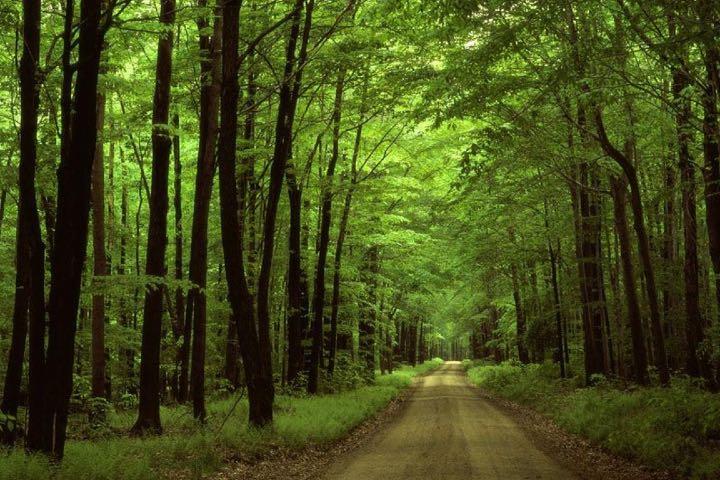Bosque de Grünewald, uno de los lugares dónde se grabó Dark Foto: Archivo