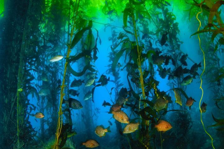 Bosque de Algas. Foto: Archivo