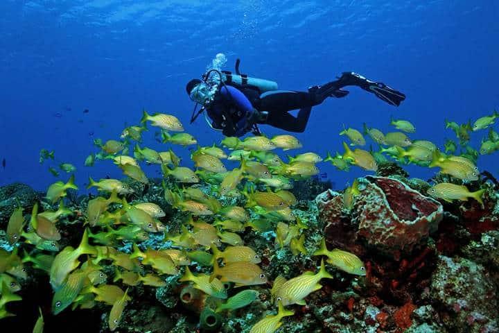 ¡Ven a bucear al Arrecife Mesoamericano hoy! Foto: Royal Resorts