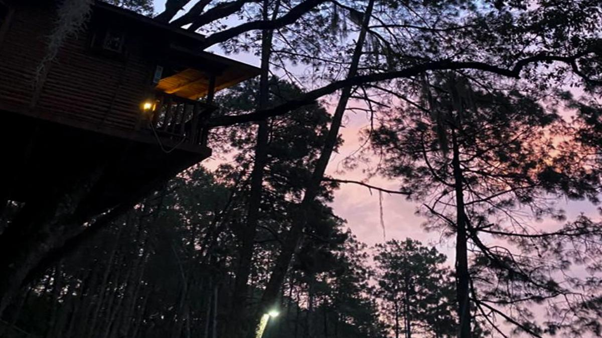 Cabañas Kali Tree. Portada (1)