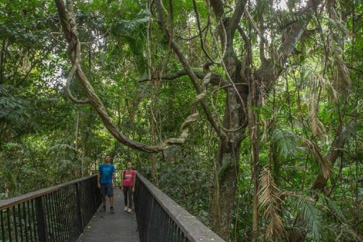 Camino al mirador Din Din Barron Falls Foto: Queensland