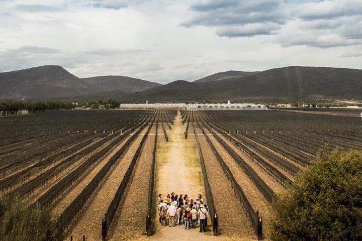 Disfruta de los recorridos y aprende del mundo del vino Foto Archivo