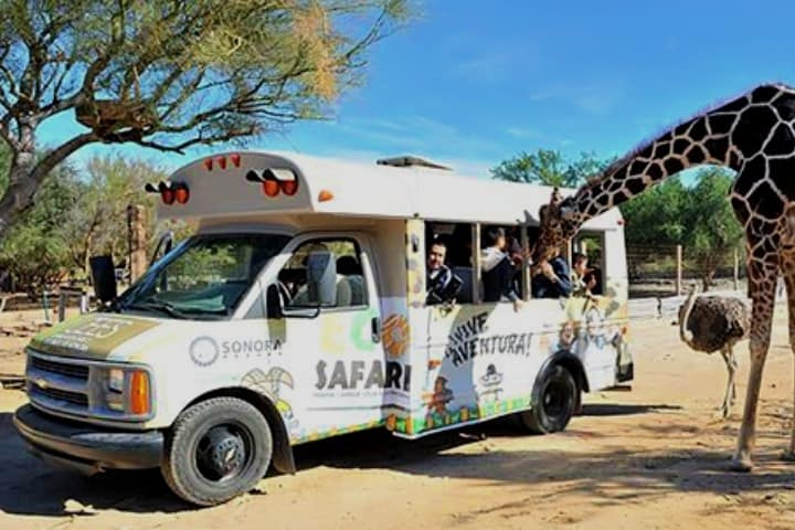 Disfruta del paseo en el safari del Parque Ecológico de Sonora Foto: Zona Turistica