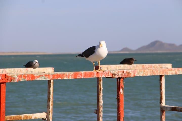 Este lugar es un paraíso en muchos aspectos Foto: Mayra Puebla