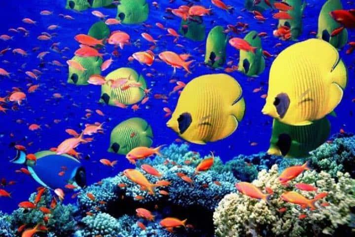 Admira la fauna que posee la Isla Tiburón Foto: Pinimg