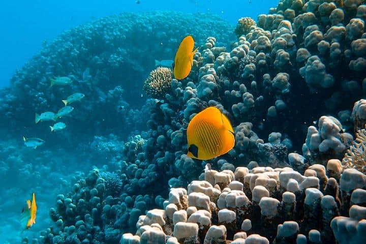 Recuerda cuidar y preservar la fauna marina del Arrecife Mesoamericano. Foto: Francesco Ungaro | Unplash