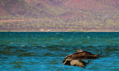 Isla Tiburón en Sonora