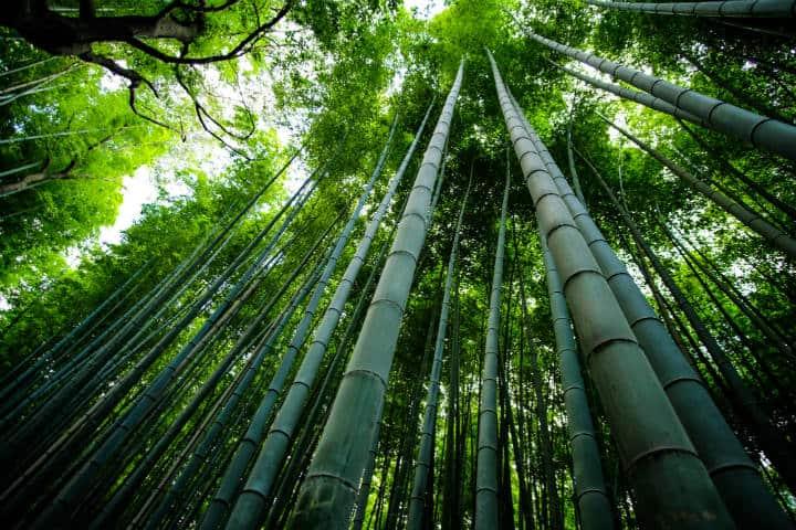 Kioto Bosque de bambú Arashiyama Foto Eleonora Albasi Unsplash