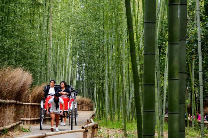 Kioto Bosque de bambú Arashiyama Foto Jessie Lee Unsplash