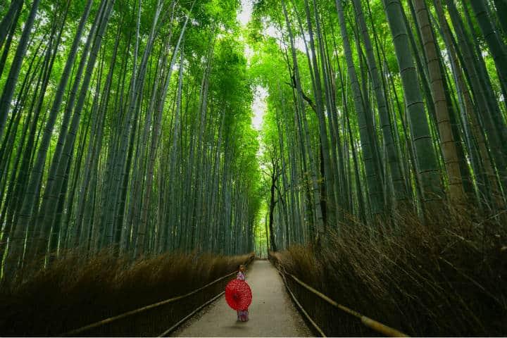 Kioto Bosque de bambú Arashiyama Foto Walter Mario Stein Unsplash